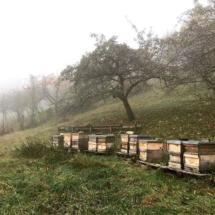 Bienenstand im Herbst, Zandermagazinbeuten, Dettingen/Erms