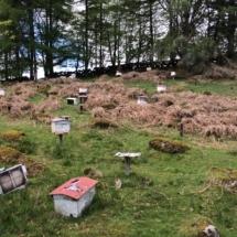 Belegstelle Dartmoor-England